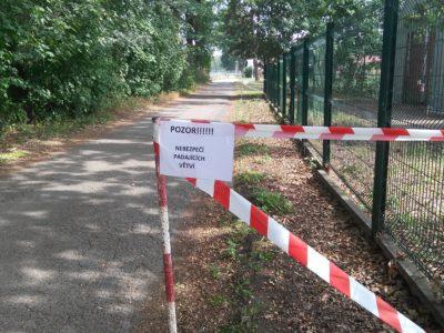 nebezpečí – praskliny ve větvích stromů