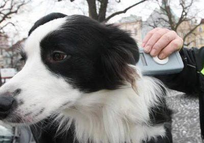 Majitelé psů v Česku mají už jen pár měsíců na splnění nové povinnosti.